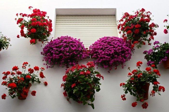 фестиваль цветов в кордове 8 (700x466, 311Kb)