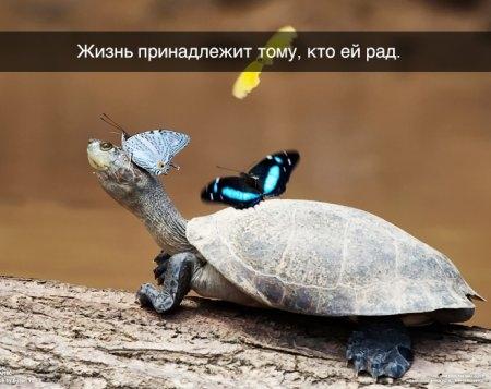 1414957591_pozitiv_05 (450x357, 91Kb)