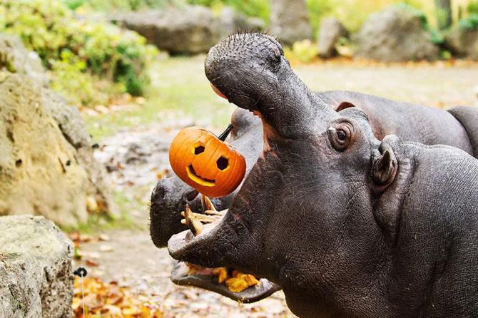 живтные праздную хэллоуин 2 (670x446, 287Kb)