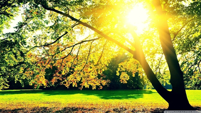 5320643_sunrise_landscapes_nature_trees_autumn_www_wallpaperhi_com_55 (700x393, 309Kb)