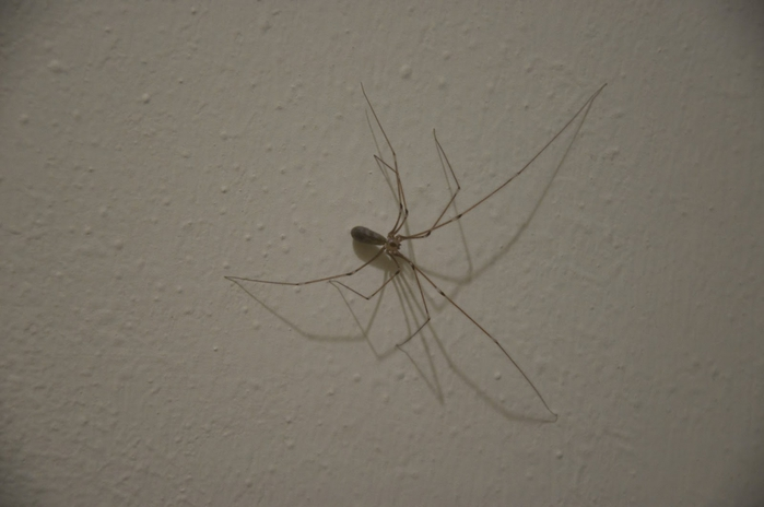 4497432_houseSpider0103 (700x464, 139Kb)