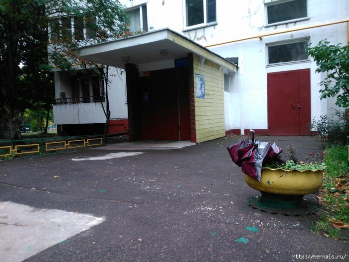 зонт посадили в клумбу вместо цветов/4555640_DSC_1452 (700x525, 342Kb)
