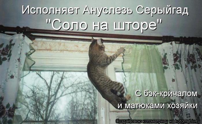 96884991_kotomatritsa_NY (700x432, 218Kb)