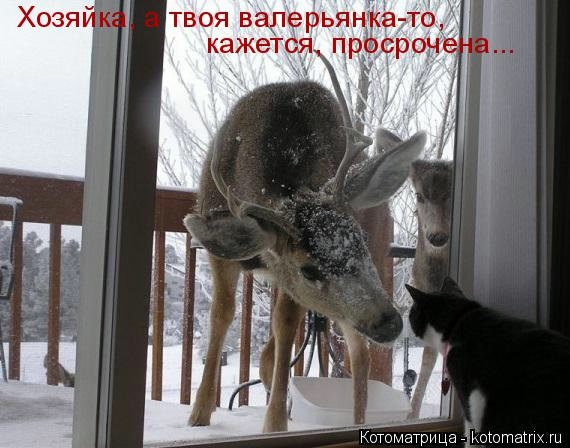 kotomatritsa__d (570x448, 120Kb)