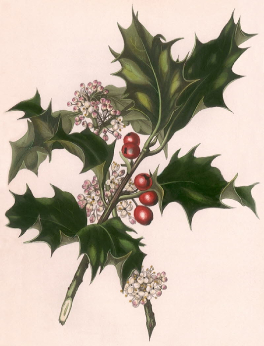db_Christmas_Traditions0731 (534x700, 272Kb)