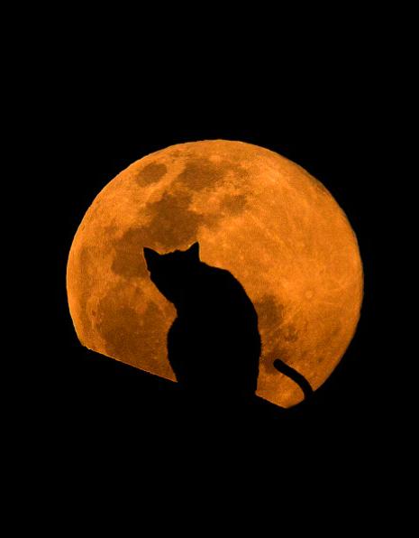 10308310-R3L8T8D-кошка (465x596, 174Kb)