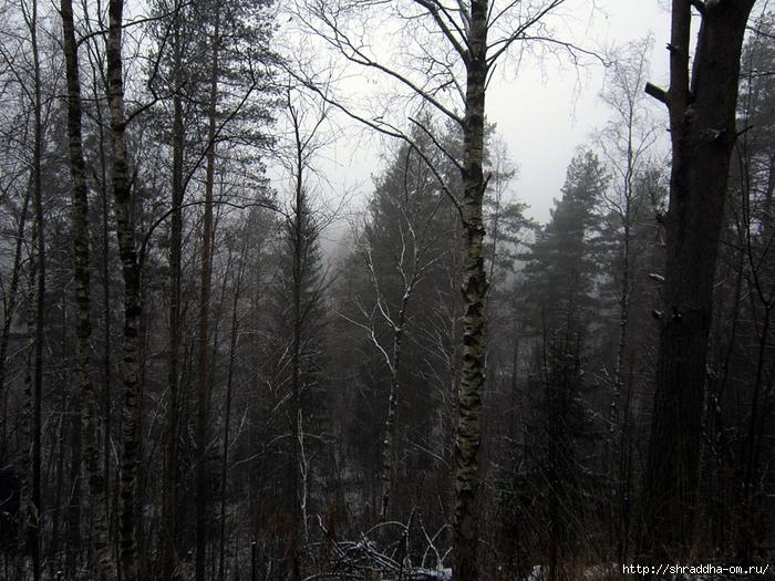 Зимний лес у реки Сестра (1) (700x525, 355Kb)