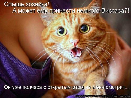1416587893_kotomatricy-2 (500x374, 178Kb)