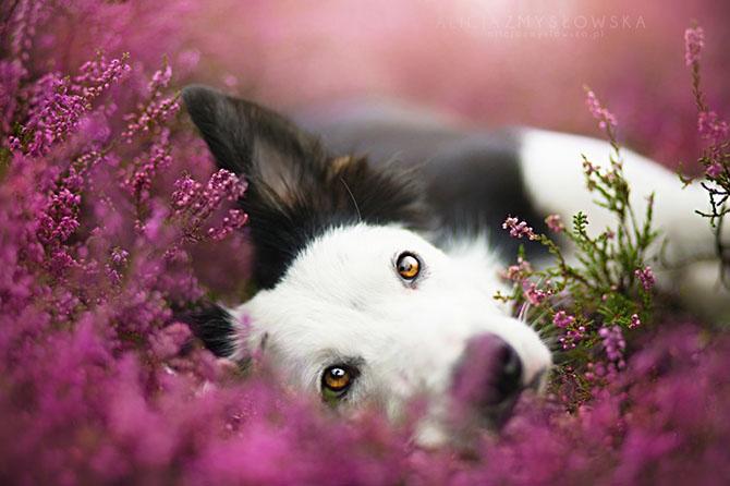 собаки фото 1 (670x446, 213Kb)