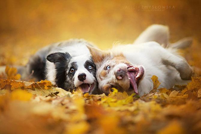собаки фото 3 (670x446, 180Kb)