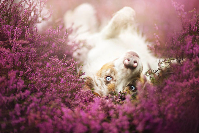 собаки фото 5 (670x446, 246Kb)