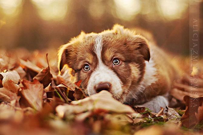 собаки фото 7 (670x445, 227Kb)