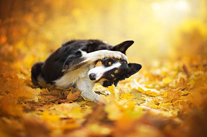 собаки фото 9 (670x446, 208Kb)