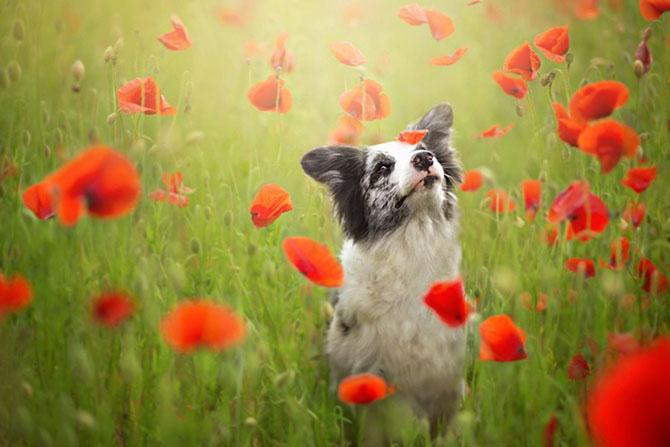 собаки фото 11 (670x447, 205Kb)