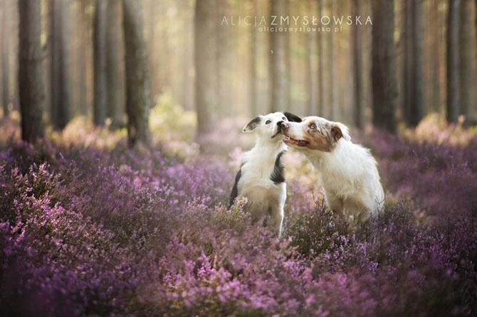 собаки фото 16 (670x446, 225Kb)