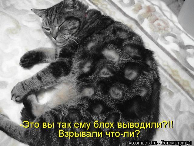 4650338_82809242_kotomatrica_36_1_ (640x480, 59Kb)