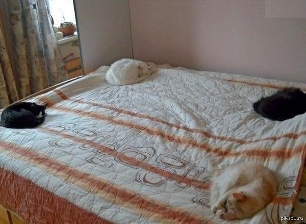 кошки ночь