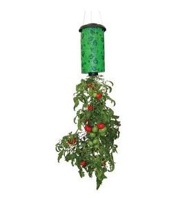 Vyirashhivanie-pomidorov-vverh-nogami-1-1 (261x287, 17Kb)