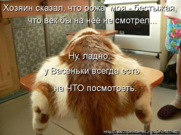 Котоматрицы (картинки с надписями)/5177462_origi142nal (590x442, 129Kb)