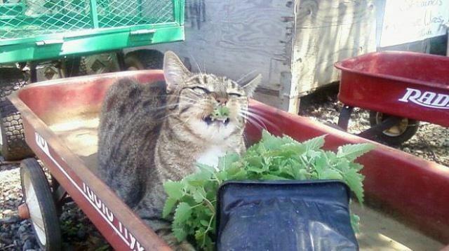 смешные фото кошек 2 (640x358, 113Kb)