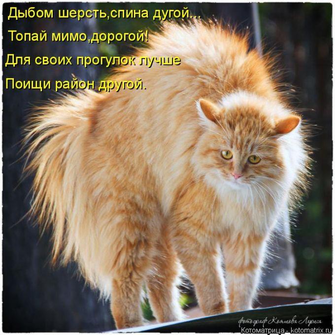 1417373719_02 (680x680, 384Kb)