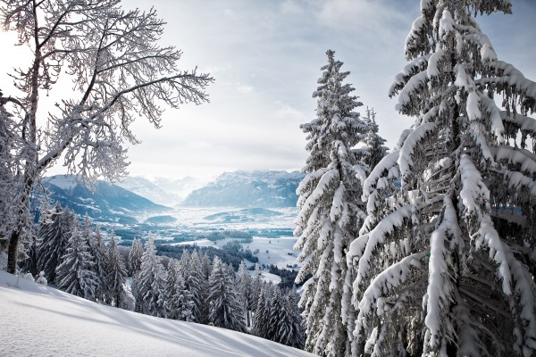 Winter_Winter_forest_in_mountains_053917_ (600x400, 107Kb)