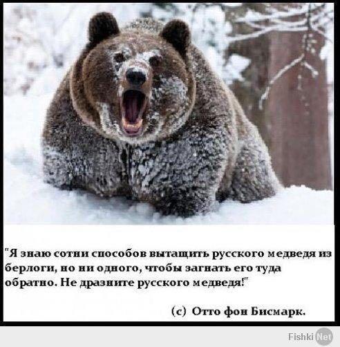 Медведь (492x502, 47Kb)