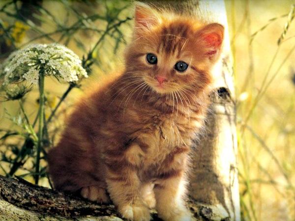 кошки (600x450, 112Kb)