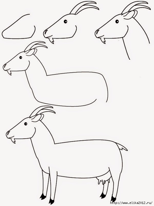 как нарисовать козу поэтапно карандашом (525x700, 103Kb)