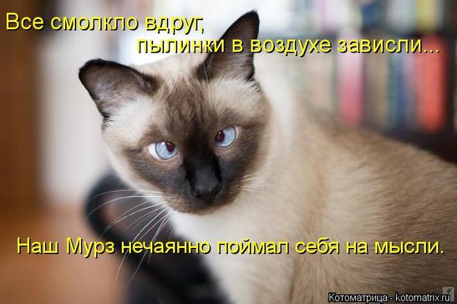 4650338_98454248_large_kotomatritsa_2 (660x439, 41Kb)