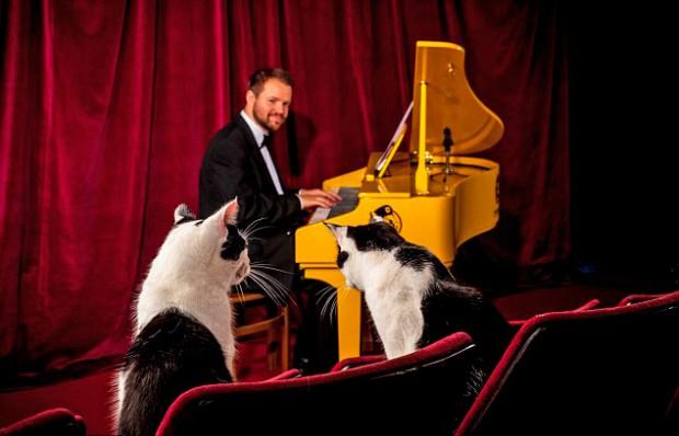 рояль для кошек 1 (620x398, 183Kb)