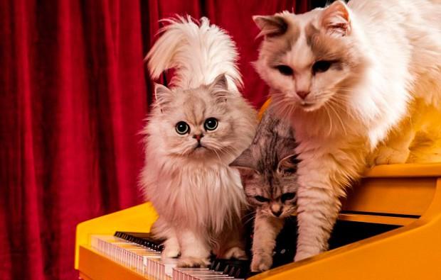рояль для кошек 2 (620x395, 224Kb)