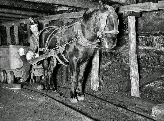 шахтерские лошади 1 (700x518, 305Kb)