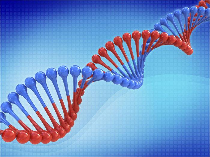 1418128578_DNA_humangene (700x525, 100Kb)