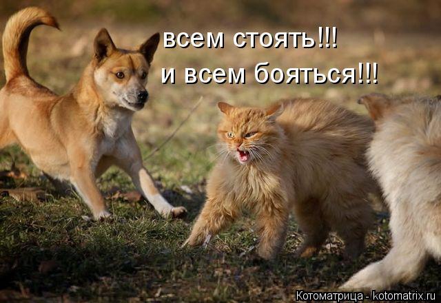 kotomatritsa_5i (640x440, 243Kb)
