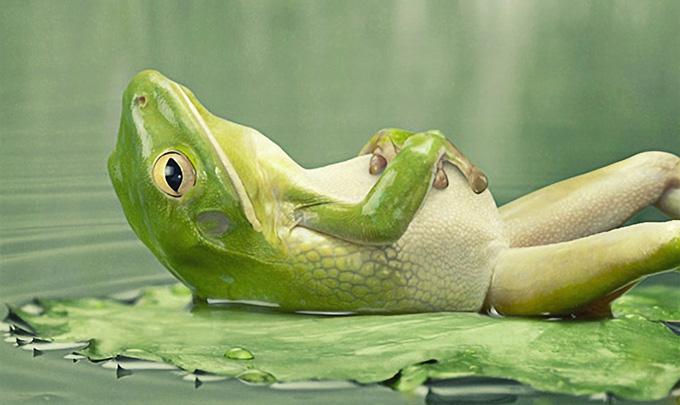 frog (680x405, 90Kb)