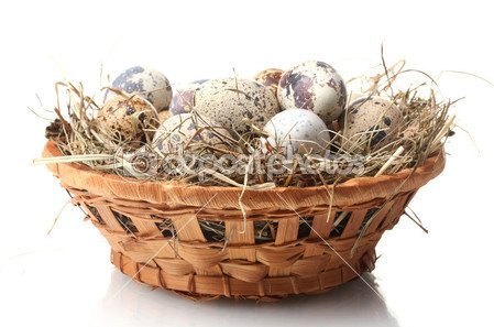 depositphotos_11070940-Quail-eggs-in-nest-isolated-on-white (449x297, 46Kb)
