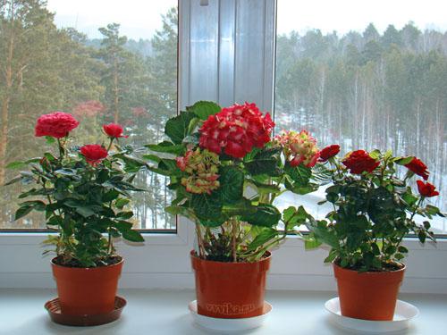 zvety1 (500x375, 86Kb)