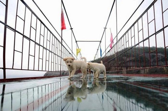 стеклянные мост в китае 3 (700x464, 271Kb)