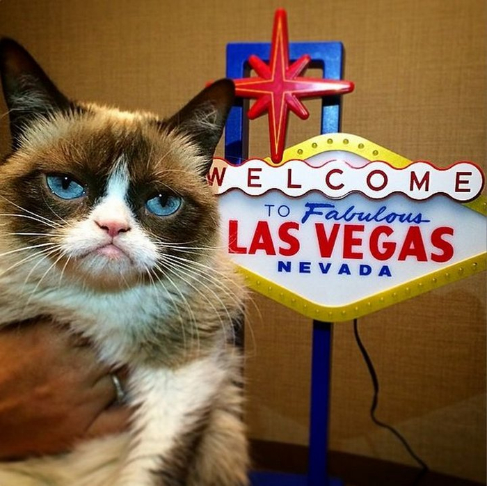 Сердитая кошка Grumpy Cat фото 2 (700x698, 451Kb)