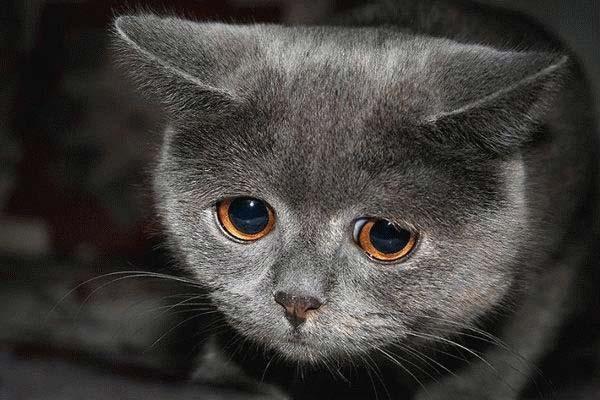 cat_09 (600x400, 42Kb)