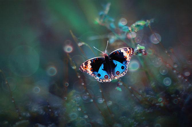 бабочки фото 6 (670x445, 169Kb)