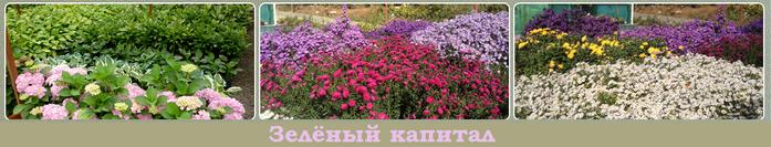 3925311_zelyonii_kapital (700x133, 199Kb)