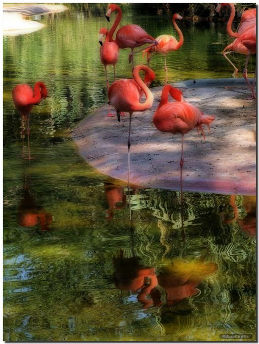 фламинго (528x700, 493Kb)