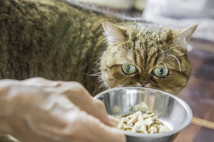 кошка кафи фото 5 (700x466, 327Kb)