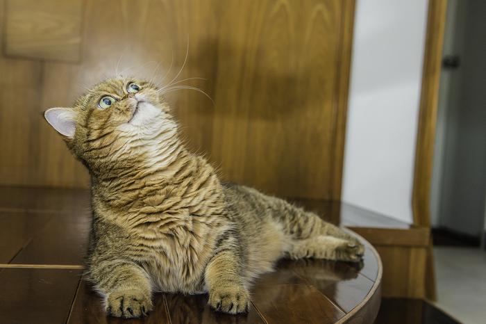 кошка кафи фото 7 (700x466, 311Kb)