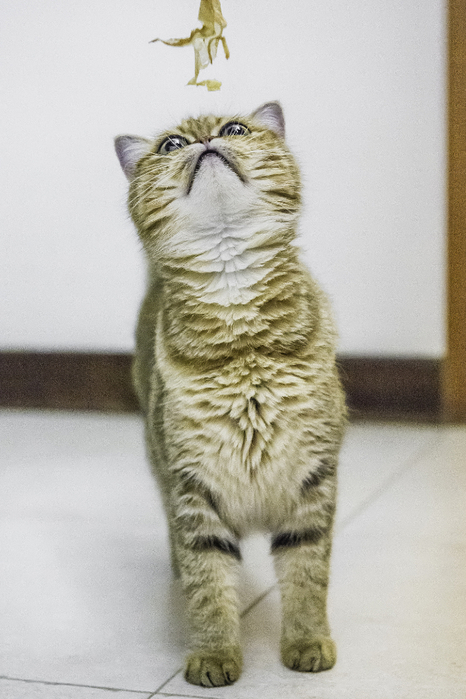 кошка кафи фото 9 (466x700, 294Kb)