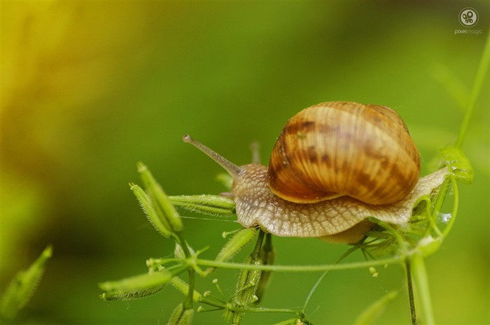 Incredible_Snails_07 (700x465, 50Kb)
