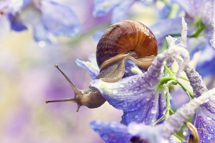 Incredible_Snails_11 (700x466, 47Kb)