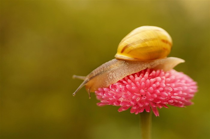 Incredible_Snails_25 (700x465, 39Kb)